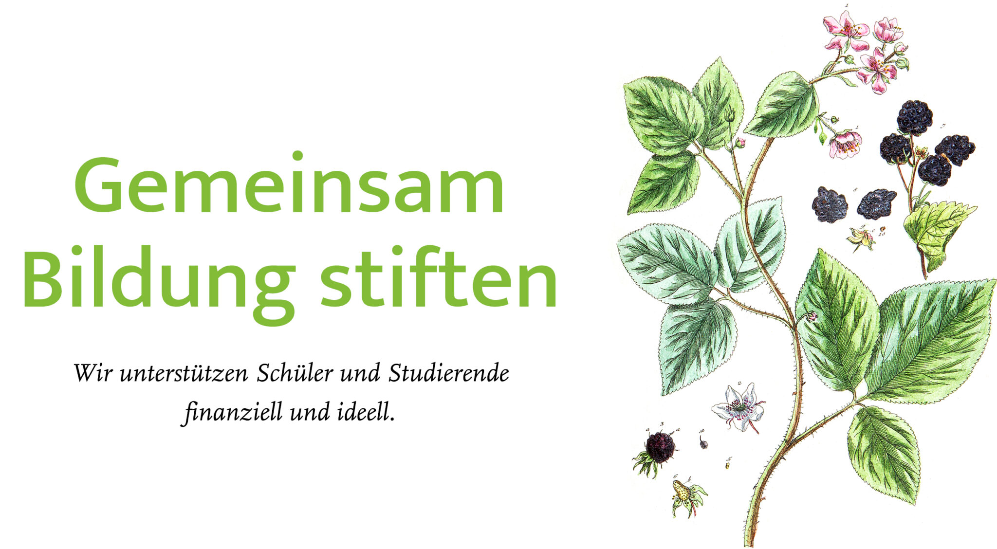 Koelner_Gymnasial_und_Stiftungsfonds_Header_Visual_Lay_04